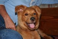 puppy Baxter